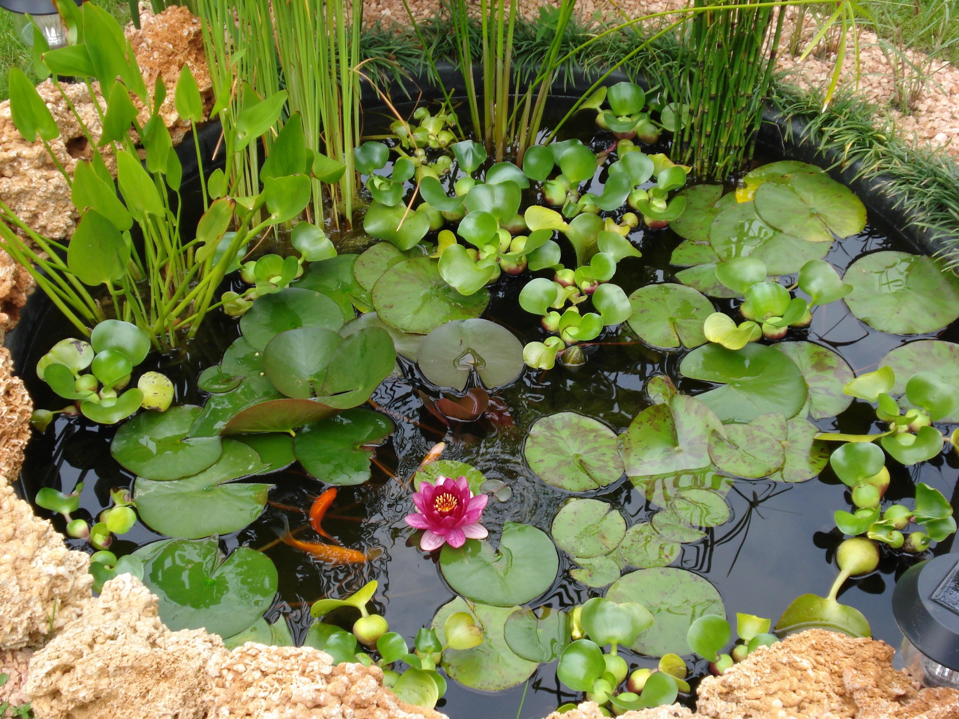 Laghetto artificiale da giardino best edoardo fivizzoli for Piscine laghetto per pesci